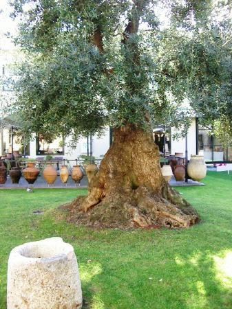 Imperia - Musée de l'olive